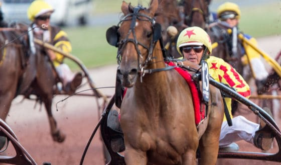 Horse and jockey at the races in Calvados