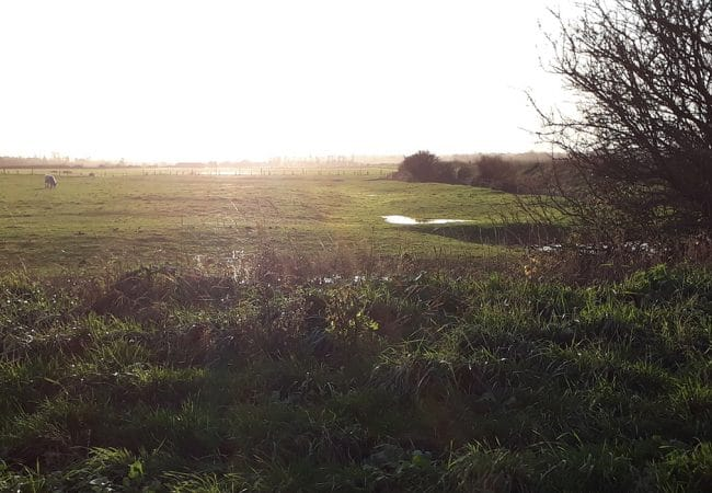 Bessin marshes